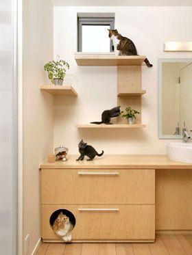 0cb10ea7e4d3fdb72b0f317965e0288b--cat-walk-cat-houses