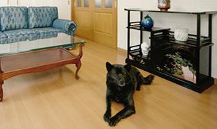 草加市S様邸ペットと暮らすリフォーム事例写真