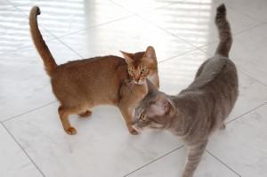 フロアタイルの上を歩くペットの猫たち