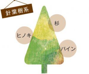 針葉樹系の特徴