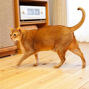 歩きやすい猫に優しい無垢の床