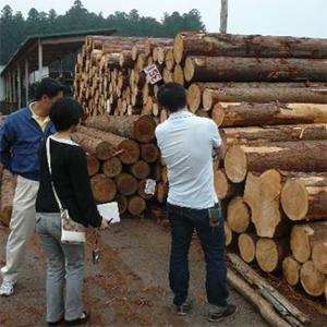 益子林業見学